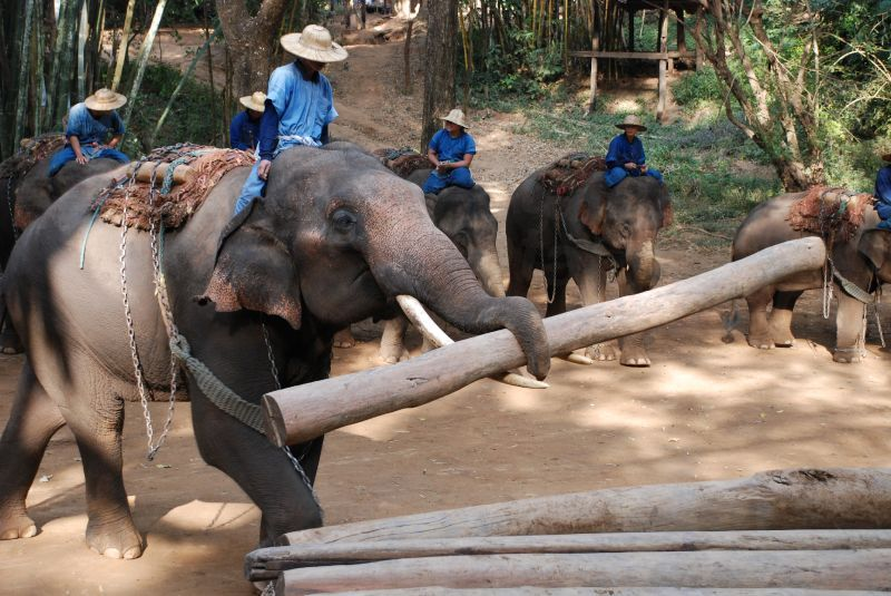 Chiang Dao Elephant Camp