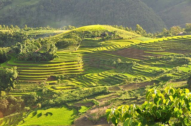 640px-Terraced_fields_Sa_Pa_Vietnam