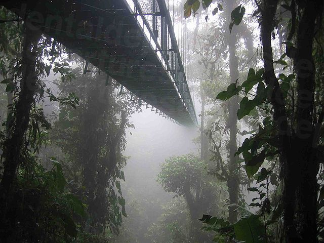640px-Costa_rica_santa_elena_skywalk